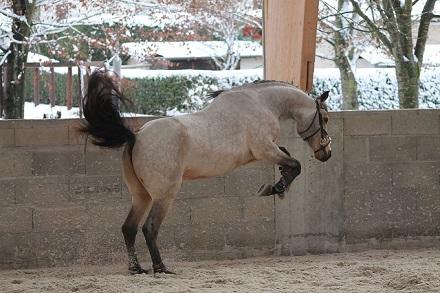 pferd futter muskelaufbau